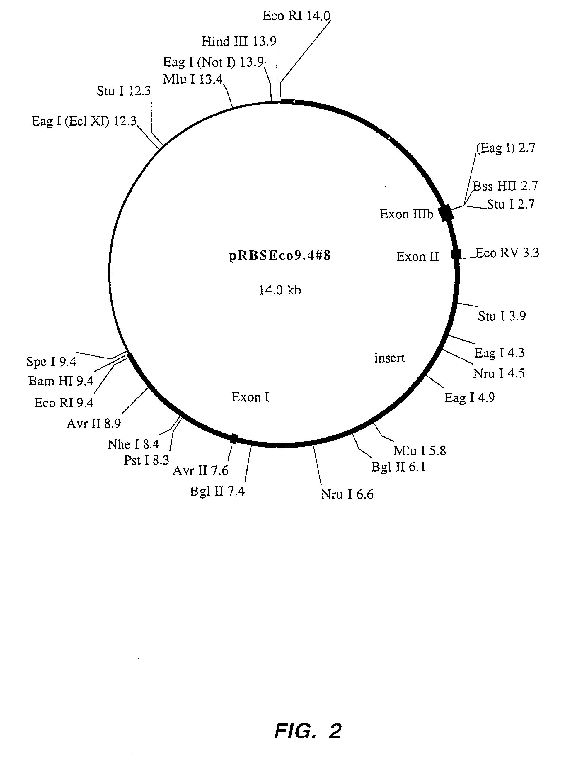 Unlabeled Neuron Diagram