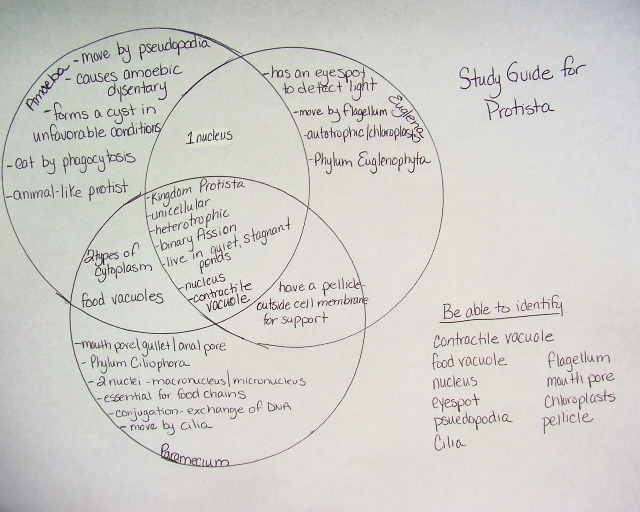 venn diagram bacteria and virus