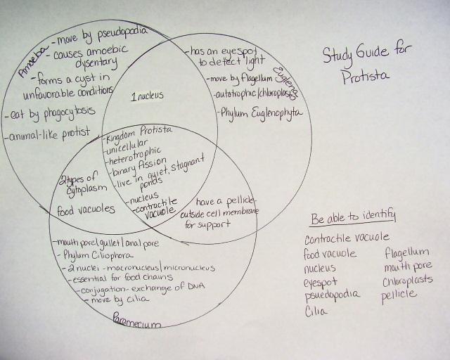 Venn Diagram Bacteria And Virus