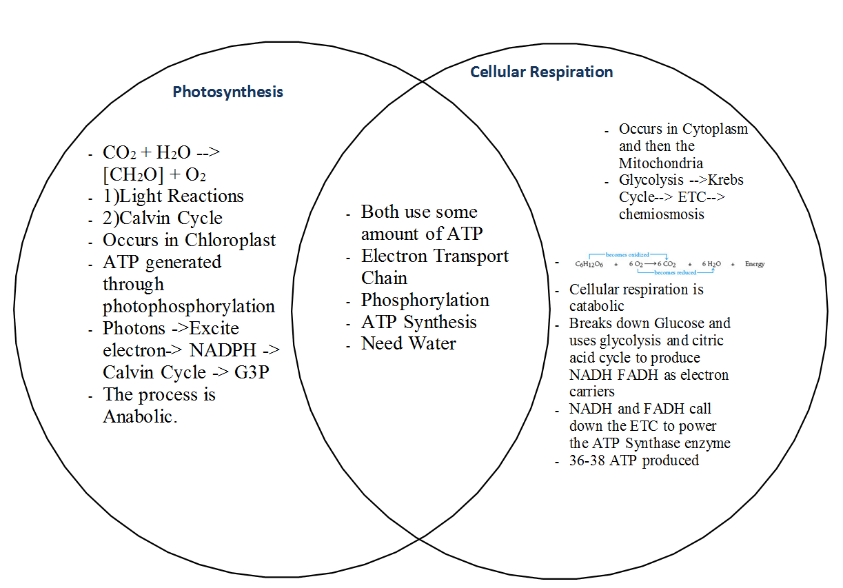 Venn Diagram Of Photosynthesis And Chemosynthesis