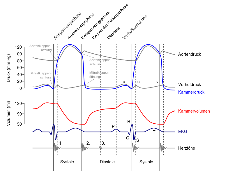 Wiggers Diagram Cardiac Cycle